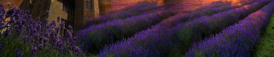 top background lavender moon3a